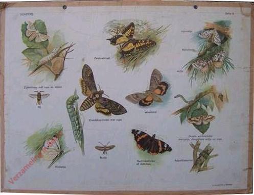 Serie 5 - Vlinders